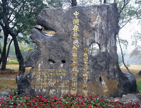 Olympic Pandas Fengyi and Meixin Settled Down in Guilin