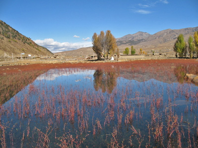 Daocheng travel guide