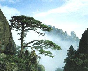 One Day Memorable Huangshan Tour