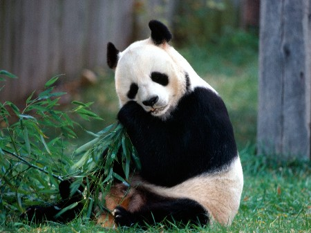 One Day Beijing City Tour with Sightseeing of Panda