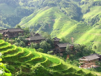 One Day Longji Rice Terraces Bus Tour