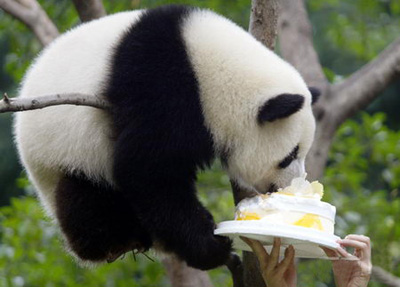 4 Days Chengdu Panda Keeper Program Tour