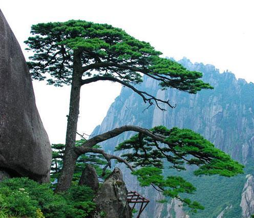 Huangshan travel guide