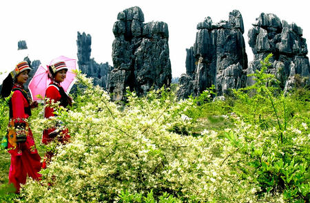 The local people in Stone Forest,Kunming Tours,Kunming Yunnan Province