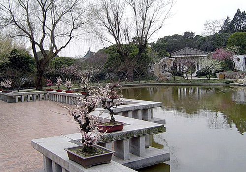 Mei Garden,or Plum Garden, is a popular attraction for appreciating plum trees and flowers in Wuxi