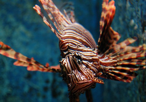 The lion fish, don't forget to dive into the sea or go to the ocenan pavilion to see the beautiful corals and sea fishes.