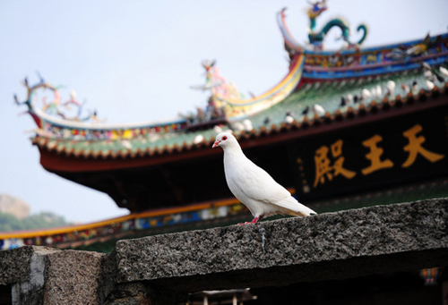 The pigeones can be seen everywhere in the temple, it is not a place only for the believing of the god, it is the harmony of the heaven, nature and the mundane world