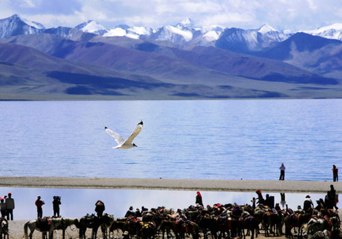 Visitors,wild birds and the beautiful Namtso Lake.