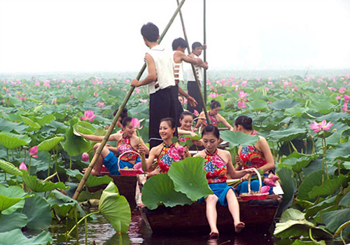 Traveling to the beautiful Weishan Lake and the lotus heaven.