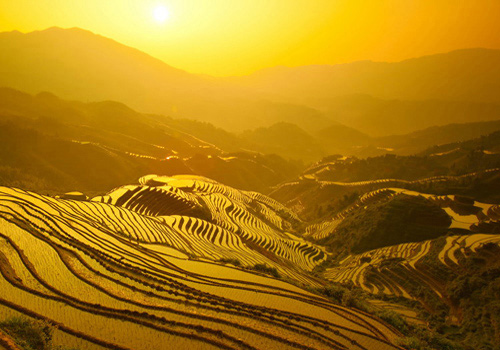 The Dragon's Backbone Rice Terraces get golden at sunset.