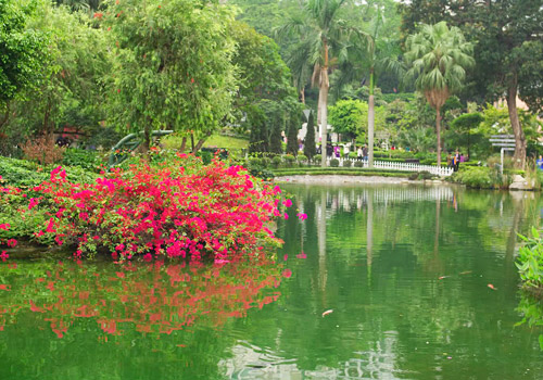 HK Zoological and Botanical Gardens is boasts over 1000 species of plants mainly from tropical and subtropical zones.