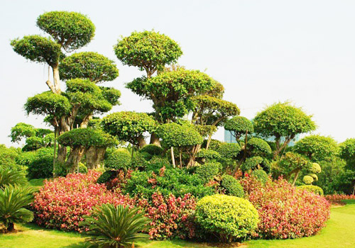 The Bonsai Garden is a gorgeous landscape copy of beautiful nature as well as a place for public to appreciate and participate Chinese plants arts.