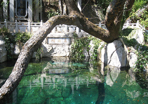 The big ancient tree that has its branch span over the Butterfly Spring is the famous Butterfly Tree.