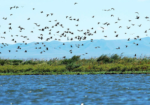 The Bird island covers only 0.5 square kilometer, but houses over 100 000 migratory birds in summer.