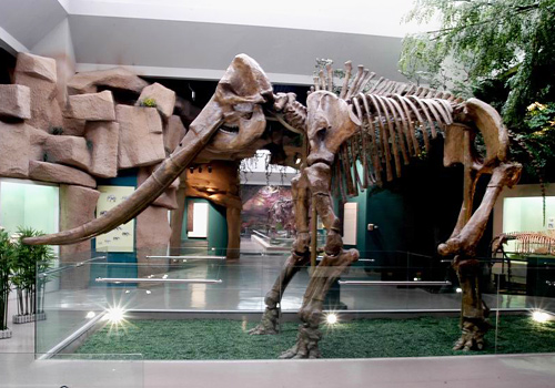 The fossils of the Cretaceous period displayed in Gansu Museum