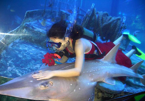 A aquanauts of Beihai Sea World is working under water.