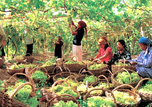 Grape Valley is famous for its sweet grapes and grapy air especially in autumn.