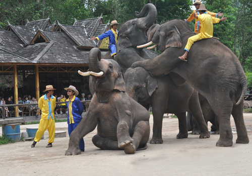 Performances given by well-trained elephants in Wild Elephant Valley of Xishuangbanna