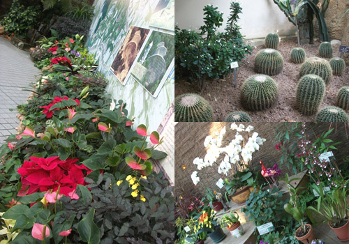 """Plant exhibition"" in the Forsgate Conservatory of Hongkong Park"