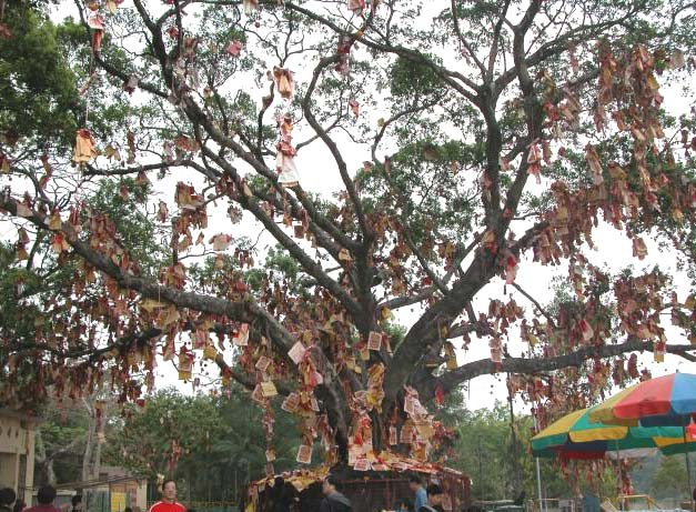 "Lam Tsuen Wishing Tree in Hong Kong is covered with ""Bao Die""."