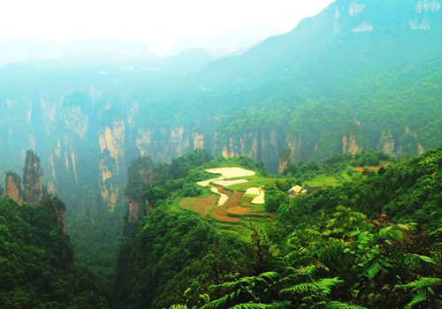 Fields in the Air of Tianzi Mountain in Wulinyuan Scenic Area,Zhangjiajie City,Hunan Province