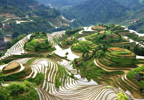 Dragon's Backbone Rice Terraces in Longsheng County is the great feats of Zhuang people.