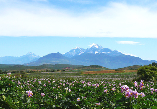 Jade Dragon Snow Mountain is a must-see attraction in Lijiang.
