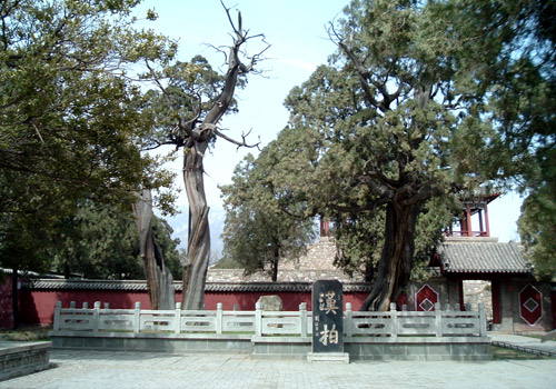 Guarding the courtyard in the face of coldness, cypresses in Hanbai courtyard are one of the top eight attractions of Taian city