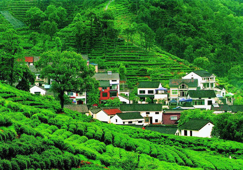 Meijiawu Tea Culture Village,an picturesque ancient village surrounded by mountains and waters,is a main production base of the West Lake Dragon Well Tea.