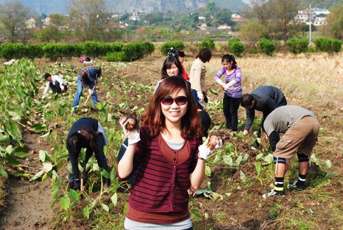 Sweet Potatoes and Taro: Company Trip to Lipu