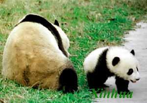 Zhouzhi National Nature Reserve