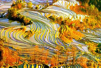 Yuanyang / Hani Terraced Fields (Yuanyang / Hani Titian)