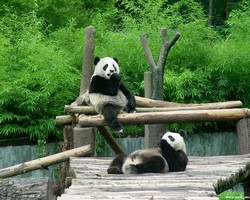Wolong Giant Panda Reserve Centre