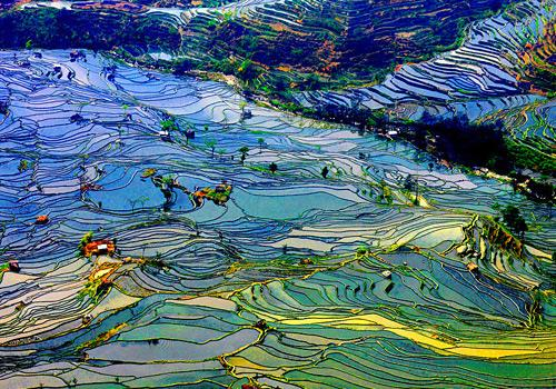 Yuanyang Terraced Fields,Yunnan