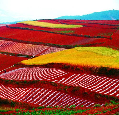 The blazing Dongchuan Red Land of Yunnan will surely astonish you.