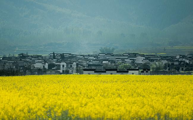 Nanping Village in spring with rape flowers, Huangshan