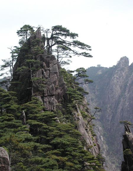 The unique pine trees on Mt. Jiuhua