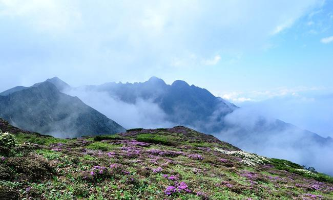 The beautiful flowers on Malong Peak, one of the 19 peaks of Cangshan Mountain.
