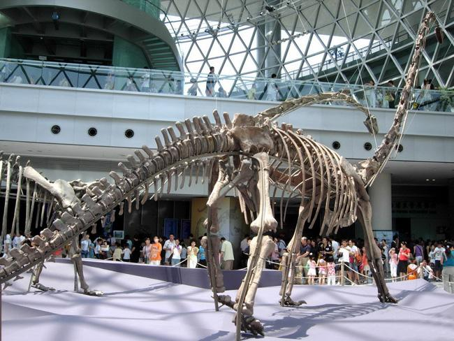 The dinosaur fossil exhibited in Shanghai Science & Technology Museum.