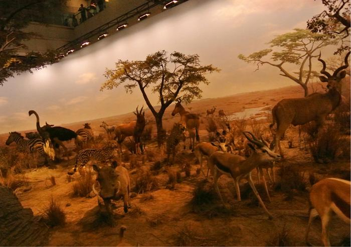 The Animal World in Shanghai Science & Technology Museum exhibits wild life specimen in a imitated ancinet background.
