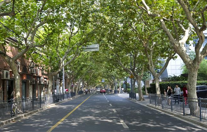 The avenue in Shanghai French Concession.