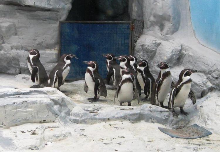 Penguins House at Beijing Zoo