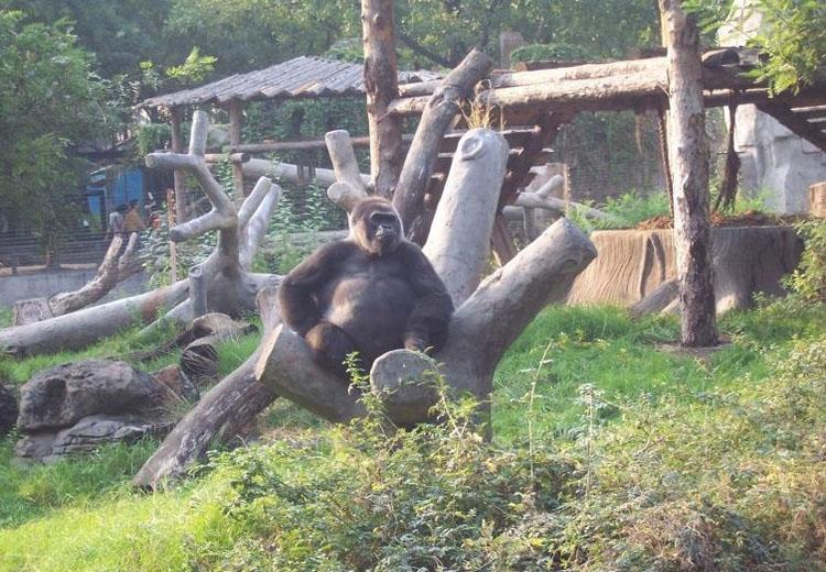 Gorillas House at Beijing Zoo