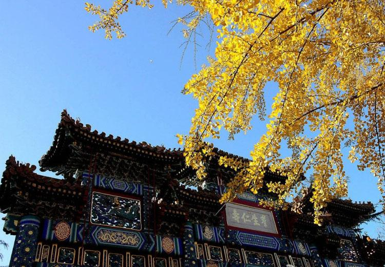 Scenery of Yonghe Lamasery Scenic Area in Autumn