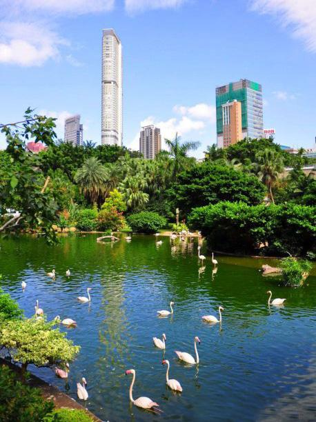 The Bird Lake of Kowloon Park, Hong Kong