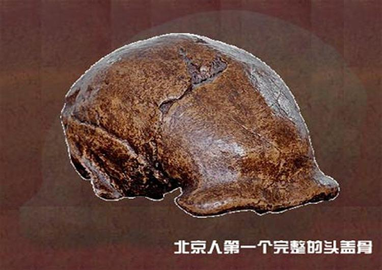 The First Complete Skull of Peking Man Discovered