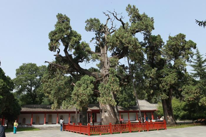 The ancient Xuanyuan Cypress is said standing there for thousands of years.