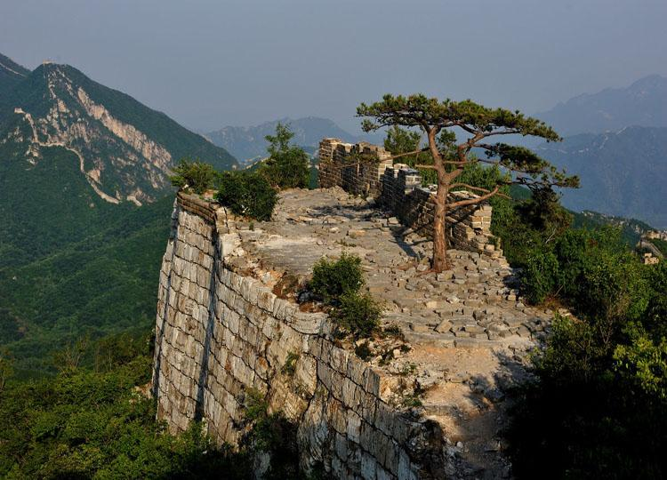 Pine on Beijingjie of Jiankou Great Wall