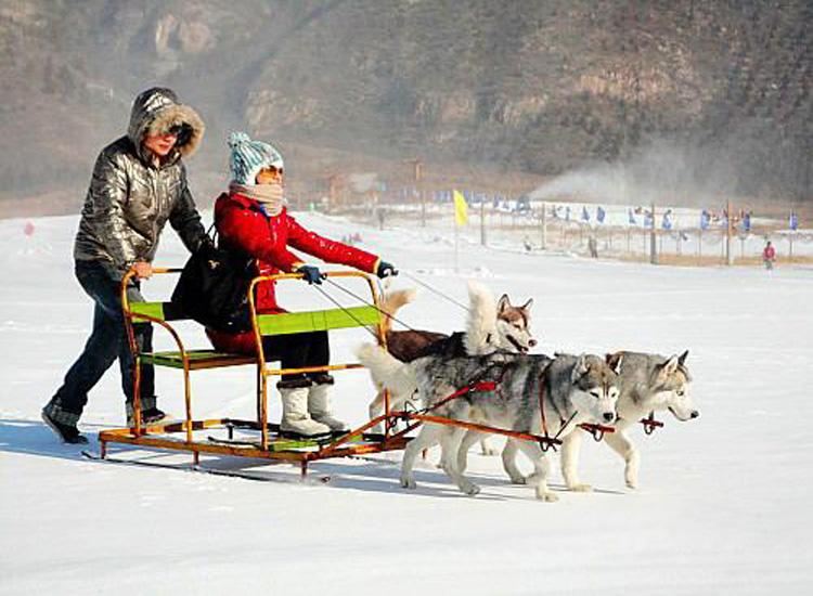Riding Dogsled at Shijinglong Ski Resort in Beijing
