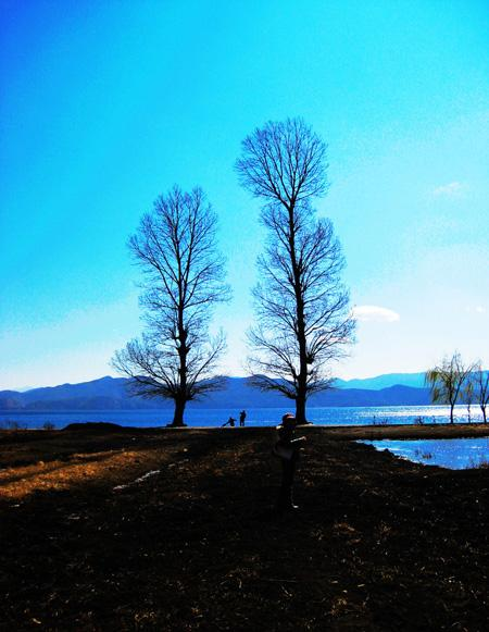 The Lover Tree on the bank of Lugu Lake